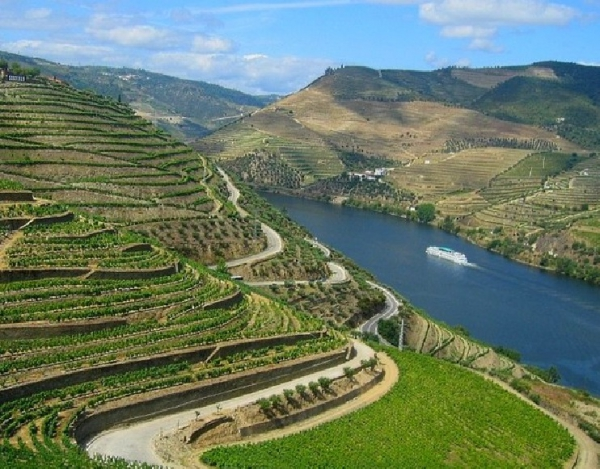Vineyard_for_sale_in_Vila Real, Lamego, Vila Nova de Foz Coa_SMA13061