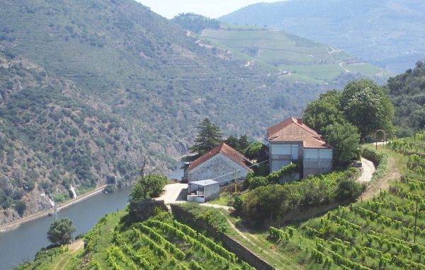 Vineyard_for_sale_in_Peso da Regua, Pinhao_SMA13064