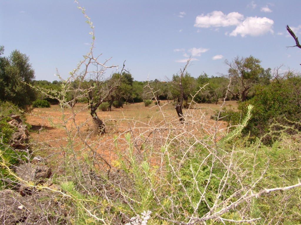Rural Land_for_sale_in_Olhão_SMA8906